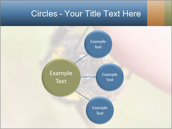 Macro Bee PowerPoint Template - Slide 79
