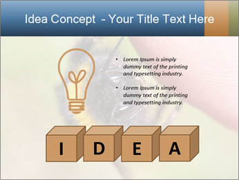 Macro Bee PowerPoint Template - Slide 80