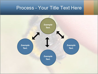 Macro Bee PowerPoint Template - Slide 91
