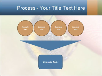 Macro Bee PowerPoint Template - Slide 93
