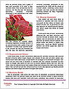 0000090328 Word Templates - Page 4