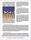 0000090330 Word Templates - Page 4