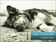 Sad Dog PowerPoint Templates