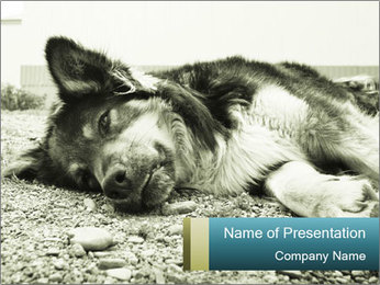Sad Dog PowerPoint Template - Slide 1