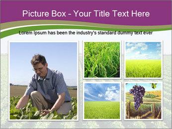 Green Field Till Horizon PowerPoint Template - Slide 19