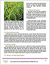 0000090349 Word Templates - Page 4