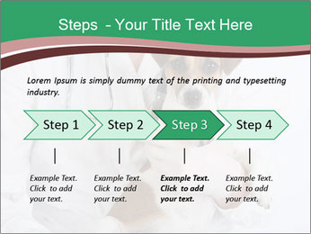 Vet Hospital PowerPoint Template - Slide 4