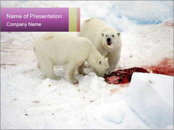 White Bears Hunting PowerPoint Templates - Slide 1