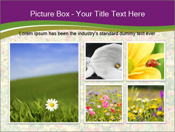 Spring Blossom PowerPoint Template - Slide 19