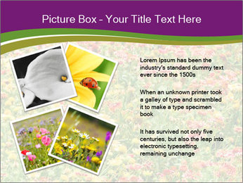 Spring Blossom PowerPoint Template - Slide 23