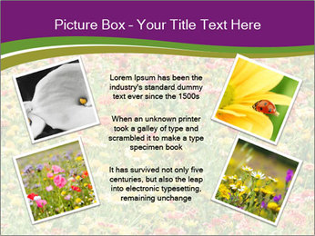 Spring Blossom PowerPoint Template - Slide 24