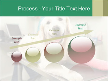 Vet Treatment PowerPoint Template - Slide 87