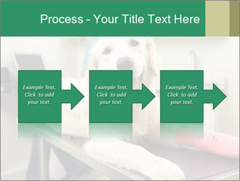 Vet Treatment PowerPoint Template - Slide 88
