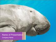 The sea cow PowerPoint Templates