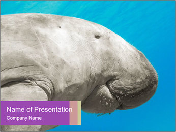 The sea cow PowerPoint Template - Slide 1