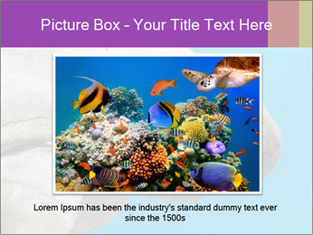 The sea cow PowerPoint Template - Slide 16