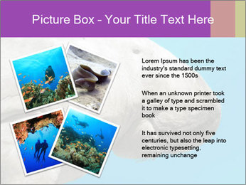 The sea cow PowerPoint Template - Slide 23