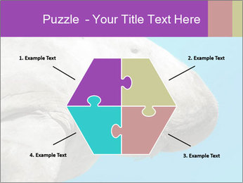 The sea cow PowerPoint Template - Slide 40