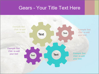 The sea cow PowerPoint Template - Slide 47