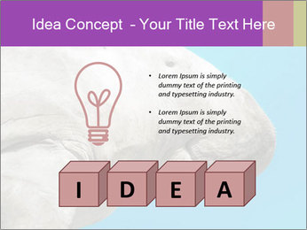The sea cow PowerPoint Template - Slide 80