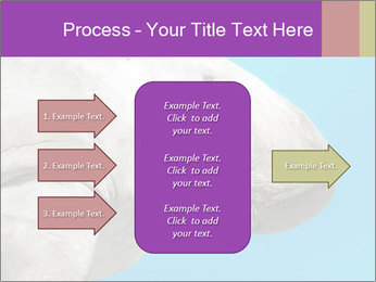 The sea cow PowerPoint Template - Slide 85