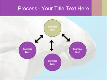 The sea cow PowerPoint Template - Slide 91