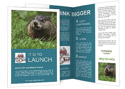 0000090416 Brochure Template