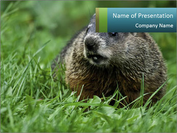 Ground Squirrel PowerPoint Template - Slide 1