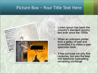 Ground Squirrel PowerPoint Template - Slide 20