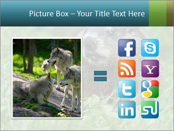 Ground Squirrel PowerPoint Template - Slide 21