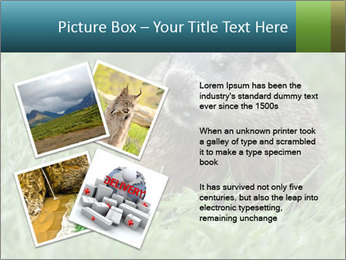 Ground Squirrel PowerPoint Template - Slide 23