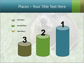 Ground Squirrel PowerPoint Template - Slide 65
