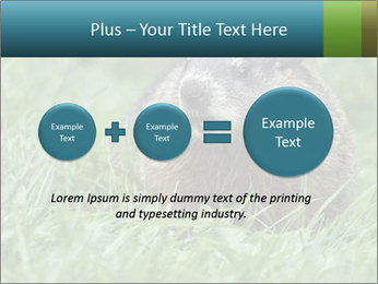 Ground Squirrel PowerPoint Template - Slide 75