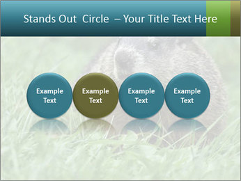 Ground Squirrel PowerPoint Template - Slide 76