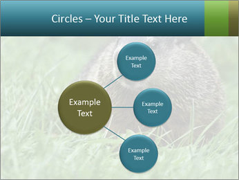 Ground Squirrel PowerPoint Template - Slide 79