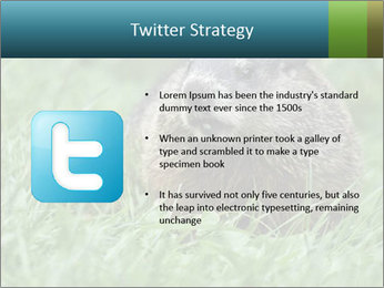 Ground Squirrel PowerPoint Template - Slide 9