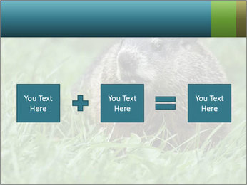 Ground Squirrel PowerPoint Template - Slide 95