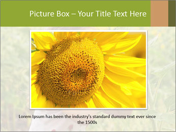 Girl And Sunflower PowerPoint Template - Slide 15
