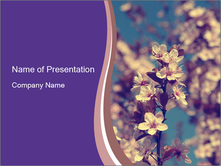 Vintage photo of pink cherry tree PowerPoint Template