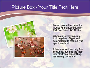 Vintage photo of pink cherry tree PowerPoint Template - Slide 20