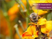 Bee In Garden PowerPoint Template