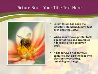 Bee In Garden PowerPoint Template - Slide 13