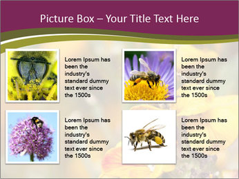 Bee In Garden PowerPoint Template - Slide 14
