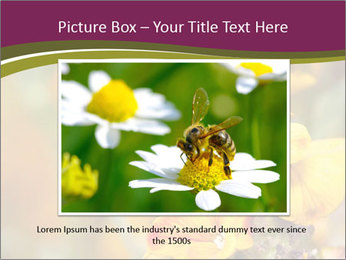Bee In Garden PowerPoint Template - Slide 15