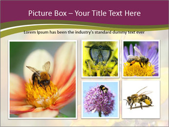 Bee In Garden PowerPoint Template - Slide 19