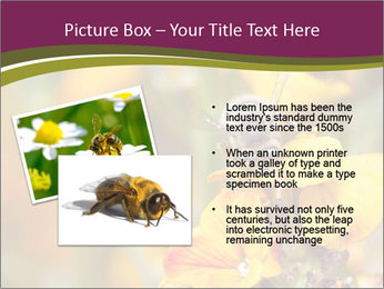 Bee In Garden PowerPoint Template - Slide 20