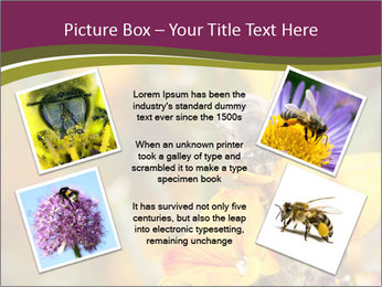 Bee In Garden PowerPoint Template - Slide 24