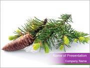 Fir branch with cone PowerPoint Templates
