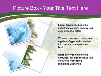 Fir branch with cone PowerPoint Template - Slide 23