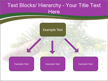Fir branch with cone PowerPoint Template - Slide 69